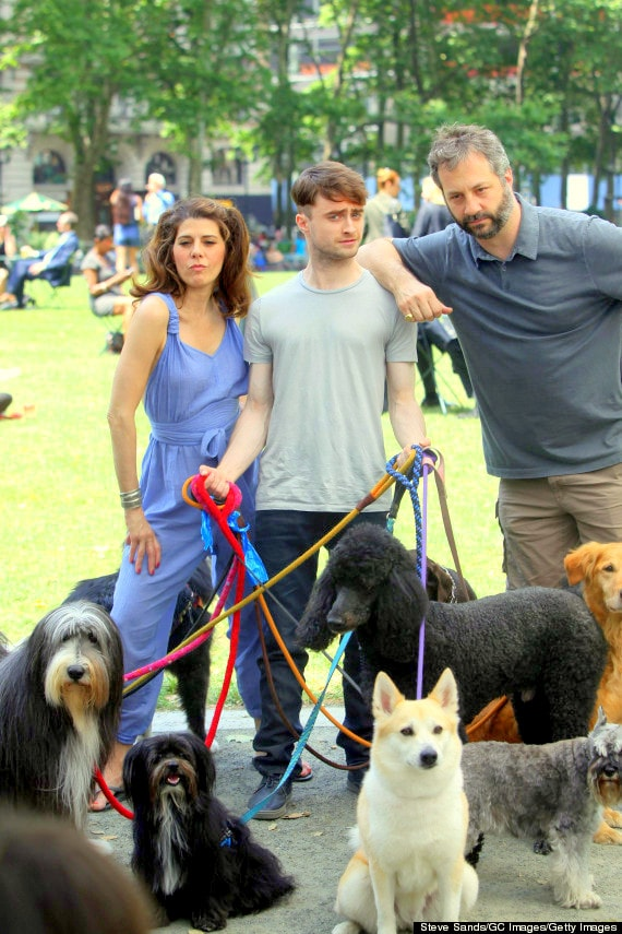 Nutro Ultra Dog Food >> Daniel Radcliffe: Dog Walker? - LIFE WITH DOGS