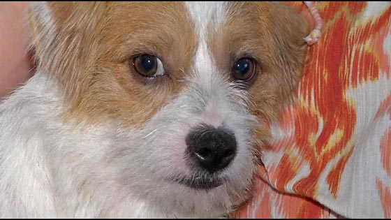 Puppy Rescued from Mill Adjusting to New Life