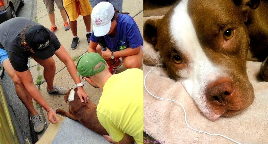 Dog Miraculously Survives Being Thrown off Busy NYC Expressway