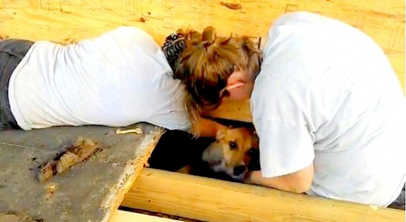 7.30.14 - Humane Society Workers Dig Out Trapped Dog by Hand1