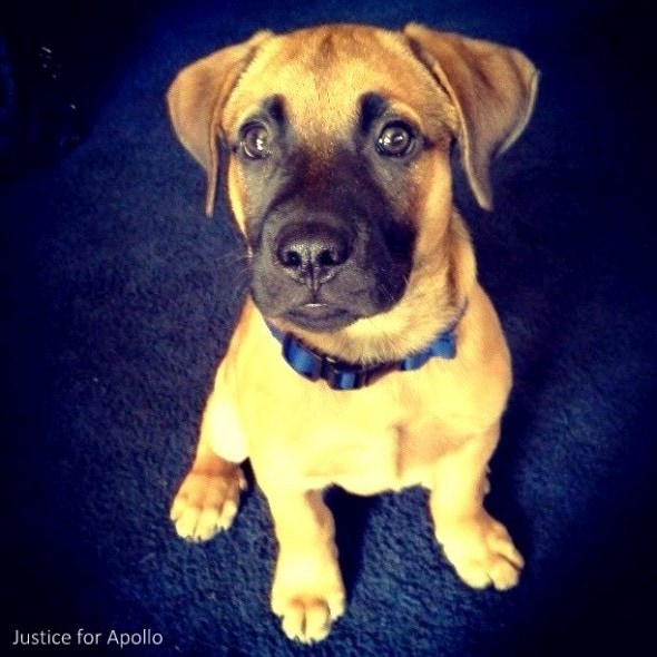7.31.14 - Cop Fired for Shooting Dog4