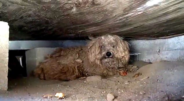Rescued Dog Lives Under Shed For A Year After Owner Dies