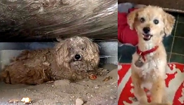 RESCUED!  Dog Lives Under Shed for a Year After Owner Dies