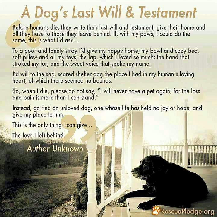 A Dog's Last Will & Testament.