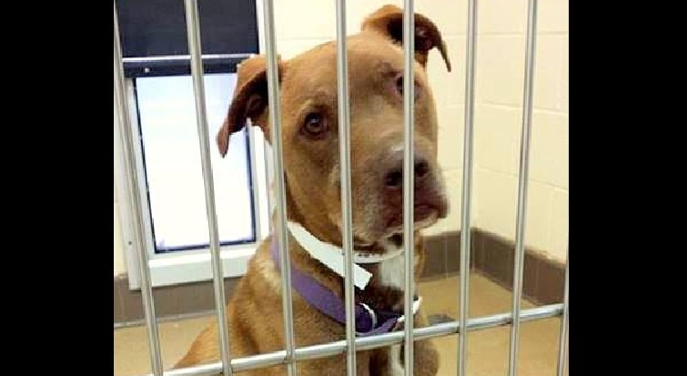 Family Goes on Vacation, Dumps Dog at Shelter