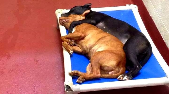 Two Shelter Dogs Find Love – With Each Other