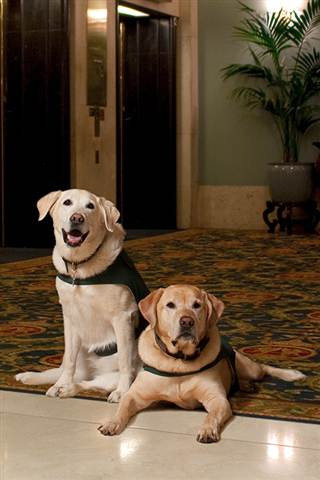Hotels Offer Unique Program for Bored Shelter Dogs and Guests