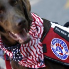 Military Vet Gets Therapy Dog for Birthday on Nation's Birthday