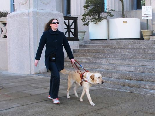 New Puppy Trainers Sought for Guiding Eyes Service Dogs
