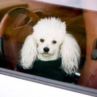 Woman Spends Birthday Trying to Rescue Dog from Hot Car