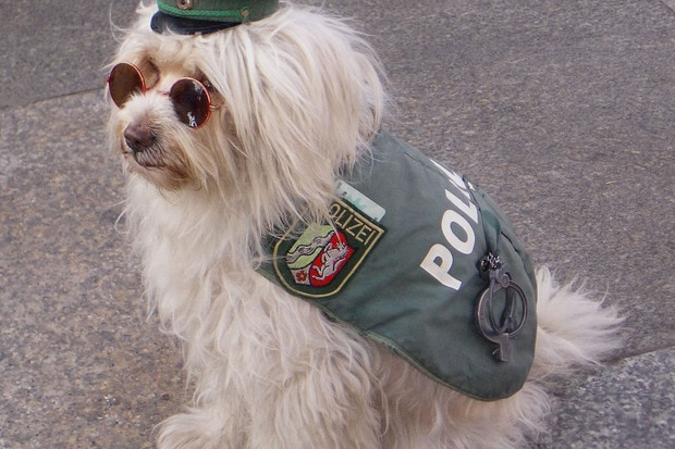 """Rhode Island State Police have """"Tech-Sniffing Dog"""" on Team"""