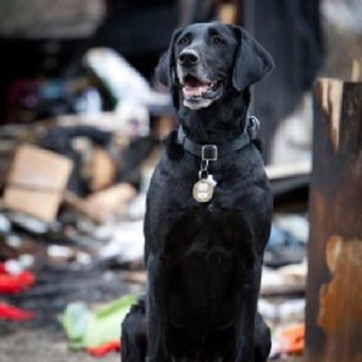 San Antonio Arson Dog on way to Hollywood for AHA Hero Dog Award