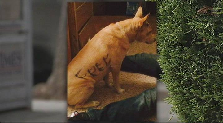 Abandoned Dog with Writing on fur Finds Forever Home