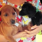 """Puppy and Kitten """"Baby Shower"""" Held at Shelter in Florida Brings 52 Adoptions"""