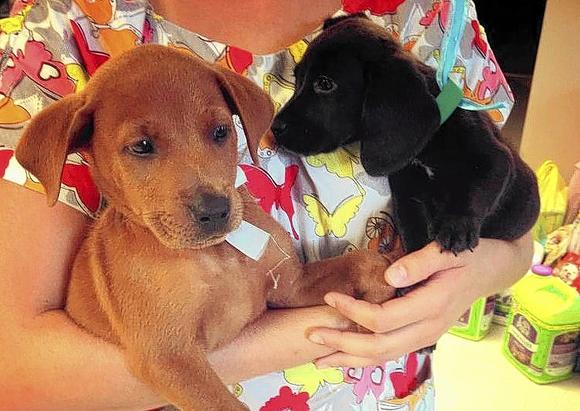 "Puppy and Kitten ""Baby Shower"" Held at Shelter in Florida Brings 52 Adoptions"
