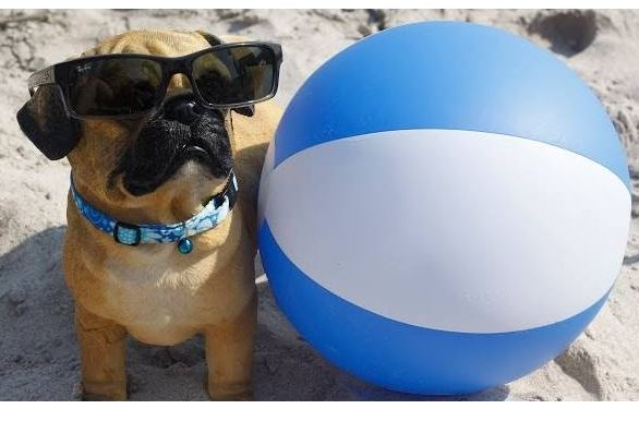 Dogs vs Beach Balls