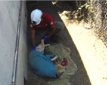 Dog Scared by Fireworks is Rescued After Getting Stuck Between Walls