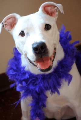 Deaf Dog Learns to Love and Now Searching for Home