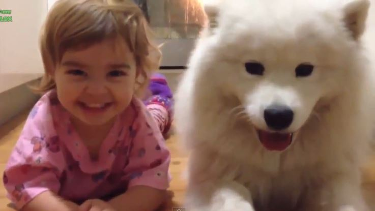 Dogs and Babies Compilation
