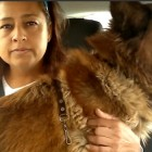 Woman Risks Own Life, Crosses Highway, and Rescues Hurt Dog