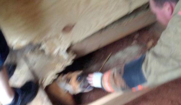 Dog Trapped Beneath Floors Gets Rescued