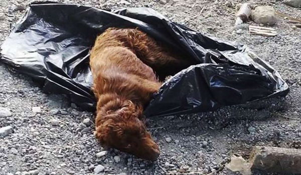 Dog Found inside Garbage Bag Recovers and Gets Adopted by Rescuers
