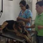 Rescuer Helps Dog That Survived Machete Attack
