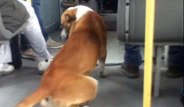 Update: Four-Legged Bus Passenger Reunited with Owner