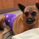 Dog Thrown from Moving Car on N.J. Parkway Recovers While Police Search for Abusers