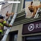 Escape Artist Dog Gets Stranded on 2nd-Story Ledge