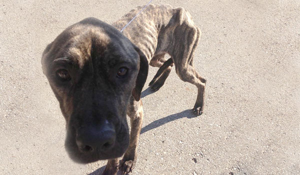 Half Starved Dog Rescued in Hawk Island Park Is on Road to Recovery
