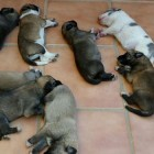 Driver Rescues Eight Puppies Left in Middle of Road