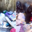 Unbelievable! Dog Found in Garbage Tossed with His Own Bed