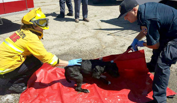 Firefighters Rescue Pit Bull Trapped in Sewage Treatment Plant Basin