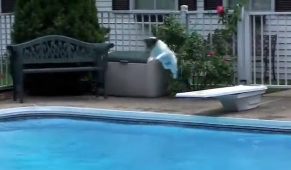 Dog Jumps in Pool After Favorite Toy