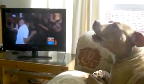Dog Sings the 'Happy' Song