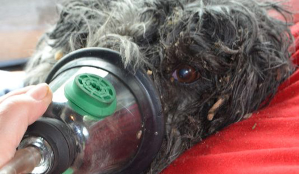 First Responders Revive Dog Pulled from Burning Home