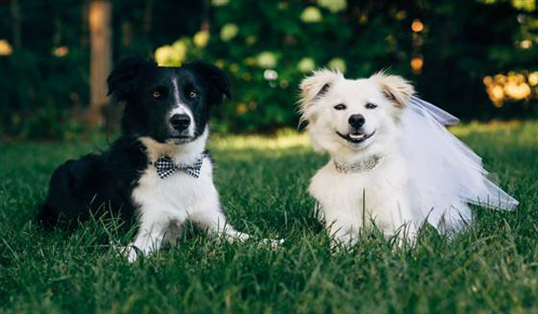 Rescue Dogs Pose for Wedding Photo Shoot