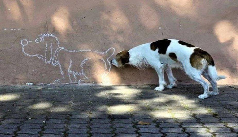 optical dogs illusions tv dog starring eight smile lifewithdogs