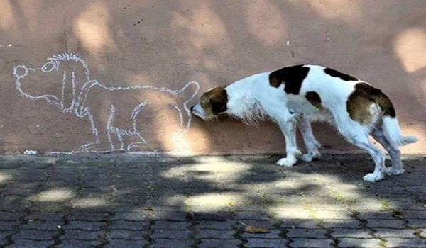 Photos: Optical Illusions Starring Dogs