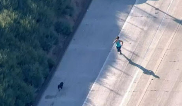 L.A. Driver Saves Loose Dog on 710 Freeway