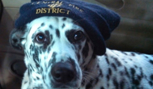 Community Helps Find Missing Fire House Dog