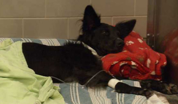 Car Accident Leaves Dog Paralyzed but Not Hopeless