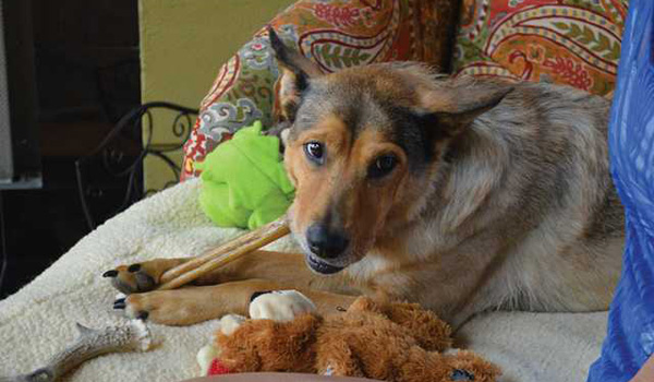Rare Medical Condition Almost Claims Shelter Dog's Life