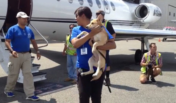 Airline Owner Helps Homeless Dogs Get to Forever Homes