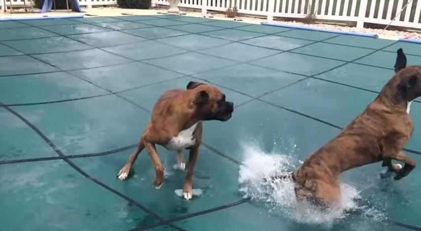 Slip 'N Slide Boxers on Pool Cover!