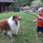 This Boy Was Laughing Uncontrollably Playing With His Dog