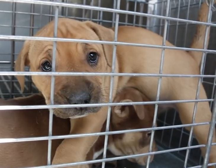 Puppies Rescued from Attic of Abandoned Detroit Home