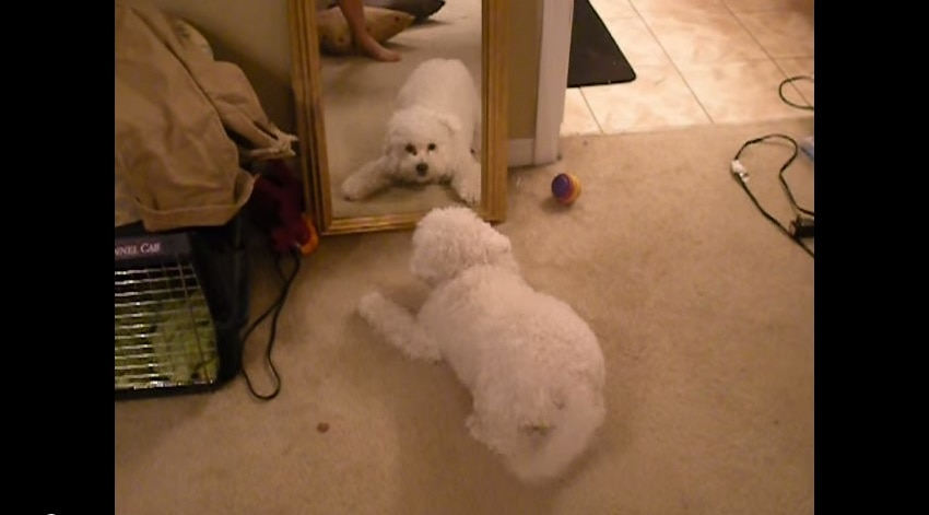 This Fluffy Dog Is Having The Most Adorable Existential Crisis