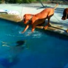 Dog Freaks Out When His Owner Dives Underwater